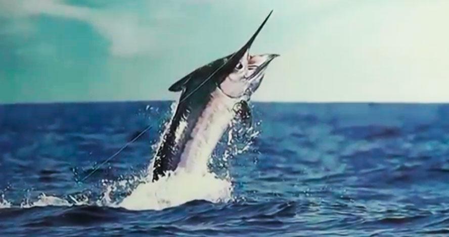 Pesca de Praia mostra a expectativa para o Mundial de Peixe de Bico
