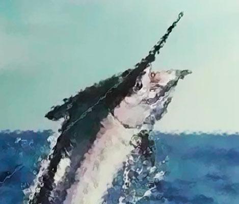 Vitória sedia Campeonato Mundial de Pesca Oceânica