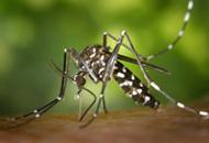 dengue_2015