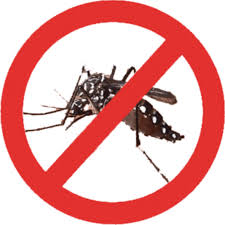 dengue222