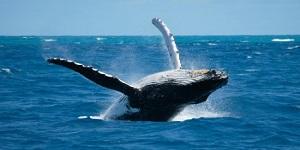 baleia 22