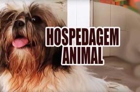 hospedage-animal