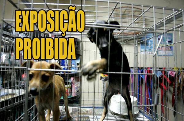 Vitória vai proibir pet shops de exibir animais para venda