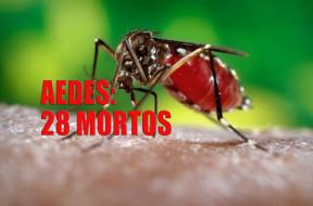 dengue-matou-28-em-2015