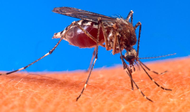 Estado tem mais de 59 mil casos de dengue; em um ano, incidência da dengue no país aumenta 600%