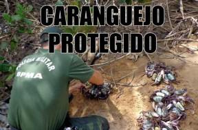 Andada-do-Caranguejo