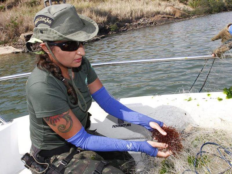 Defeso do camarão: pesca, transporte e comercialização estão proibidos