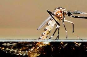 mosquito_aedes_2