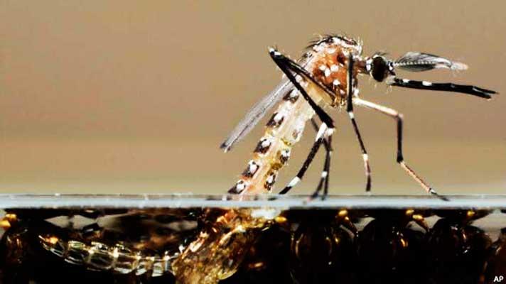 Verão é tempo de aumentar os cuidados contra o mosquito Aedes aegypti