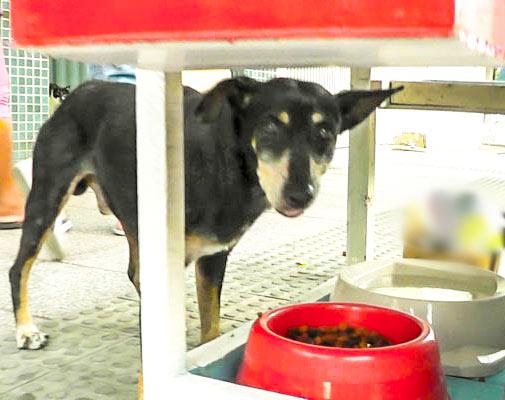 Cães de rua ganham ponto de alimentação em cariacica