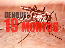 Aedes_aegypti_mosquito2