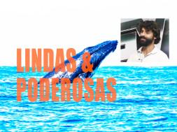 baleias-gvnews