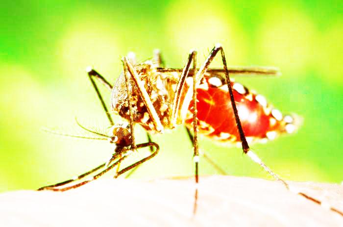 Sesa divulga boletim de Dengue, Zika e microcefalia