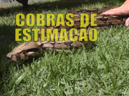 cobra-gvnews