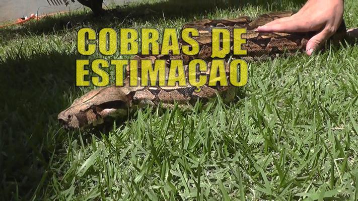 Vet Jornal mostra que as cobras também podem ser bons animais de estimação