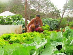 agricultura_sustentavel_Bandes