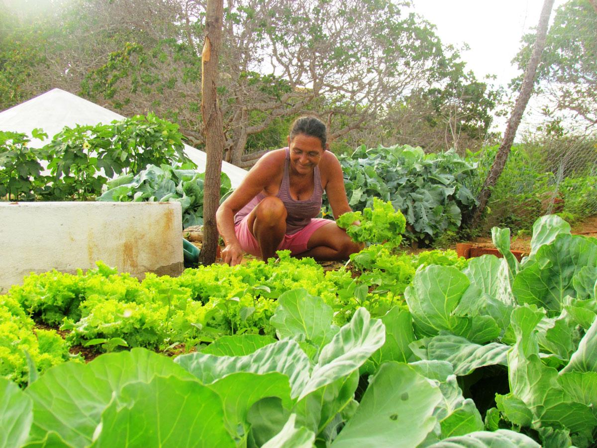 Agricultura sustentável tem linha de crédito especial do Bandes