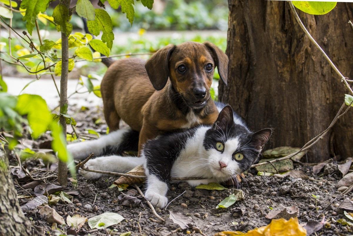 Vitória tem feira de adoção de cães e gatos neste sábado