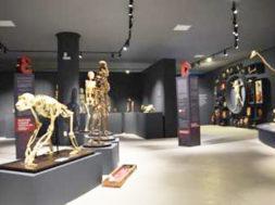 museu-corpo-ufes