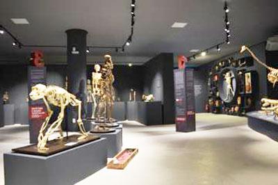 UFES abre novo Museu de Ciências da Vida com exposição sobre o corpo humano