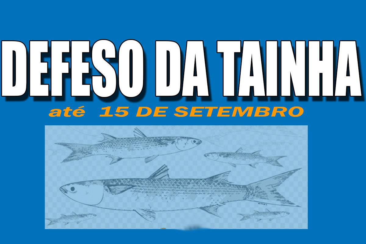 Proibição de pesca da tainha vai até setembro