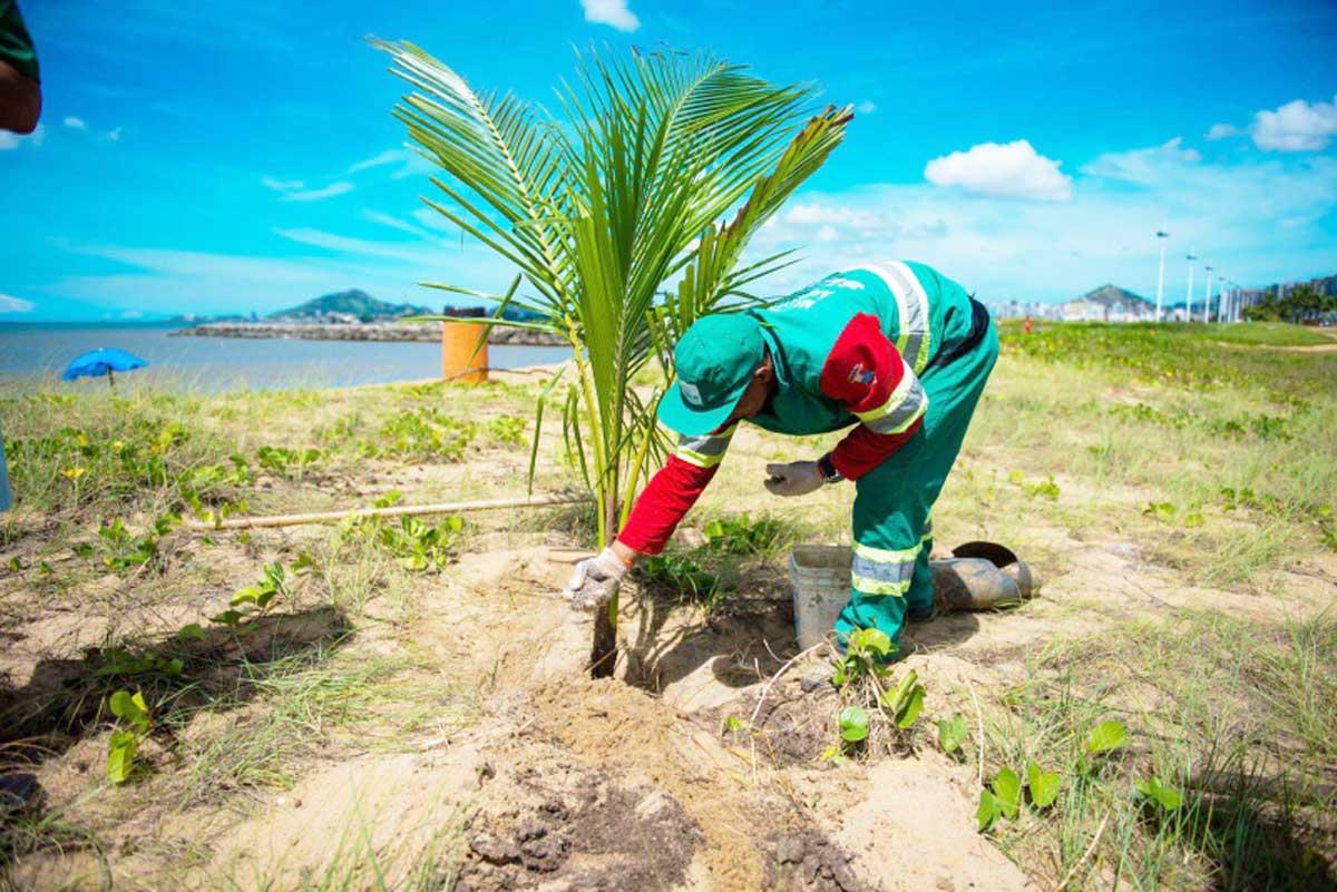 Vitória planta mais coqueiros na Praia de Camburi