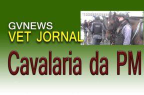 cavalaria-da-PM