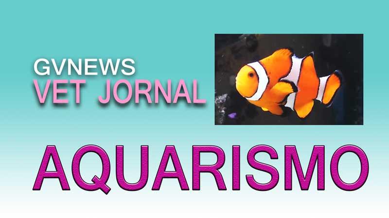 Aquarismo, lazer que relaxa e dá prazer